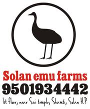 start emu farming and gain high profits