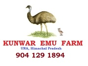 Kunwar Emu Farm and Hatchery