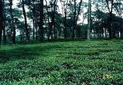 4 Kanal land for sale in Bir (Chaugan) - Bir in Himachal